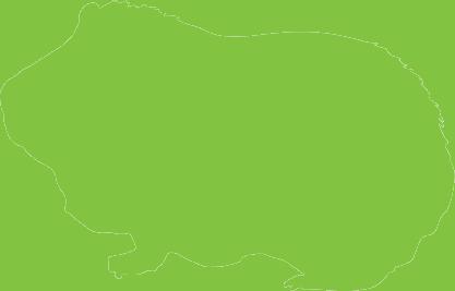 cavia_green